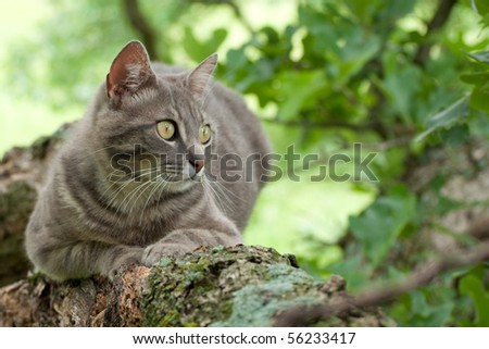 Spotted blue tabby cat in a tree - stock photo