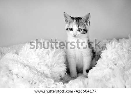 spotted kitten sitting on a fur rug for cats (black and white) - stock photo