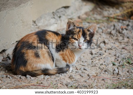 Spotted stray kitten sitting on the road. Animals - stock photo