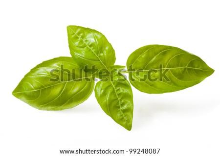 Sprig of basil isolated on white - stock photo