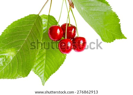 Sprig of cherries with red ripe berries and green leaves, isolated on white background - stock photo