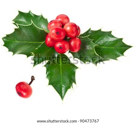 Sprig of European holly ilex christmas decoration  isolated on white background  - stock photo