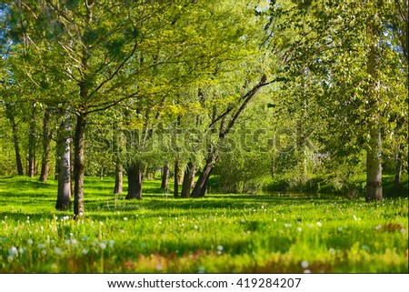Spring and Nature - stock photo