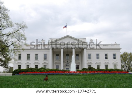 Spring at the White House in Washington DC, with one American Robin in the grass - stock photo