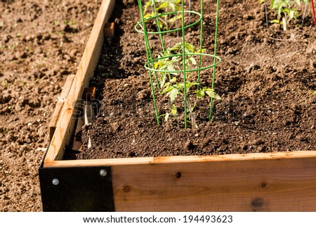 Spring at thecommunity garden in the city. - stock photo