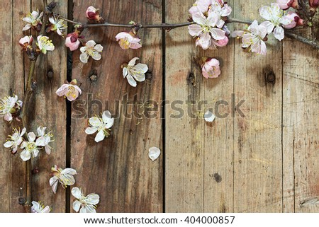 Spring background: apricot branch with flowers and buds blooming and the individual flowers and petals on rough wooden background. Floral background with selective focus and copy-space. - stock photo