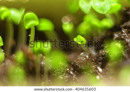 Spring background bokeh. Sprouted sprouts closeup shallow depth of field - stock photo