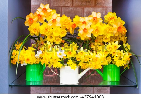 Spring background composition with yellow daffodils in water cans - stock photo
