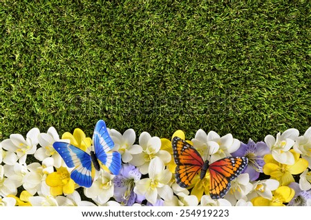 Spring background - grass, butterfly, flowers.   - stock photo