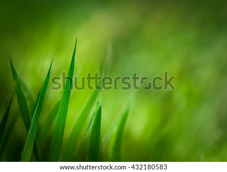 Spring background.Grass  with copyspace.Floral background.Nature bokeh - stock photo