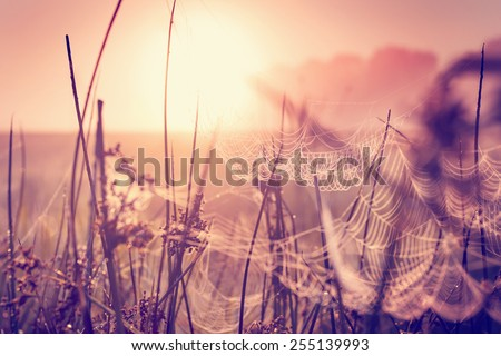spring background/ Morning Fresh Landscape with sunrise/ spring or summer nature background./selective focus  - stock photo