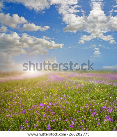 spring background pink many flowers sun - blue sky - clouds - stock photo