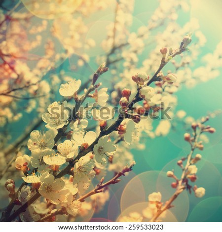 spring background. Retro stale. - stock photo