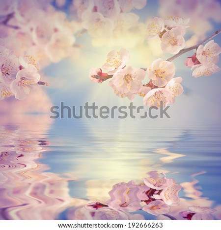Spring background. Sakura branch reflected in water. - stock photo