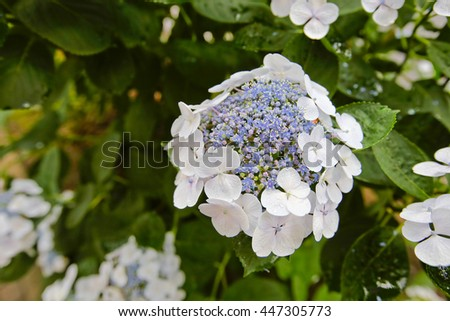 Spring background with beautiful blue flowers  - stock photo