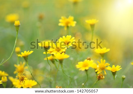 Spring background with beautiful yellow flowers - stock photo