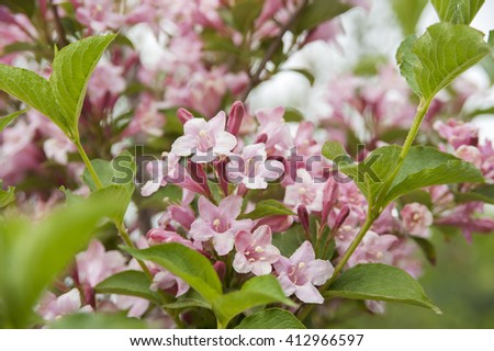Spring background with blooming flower - stock photo