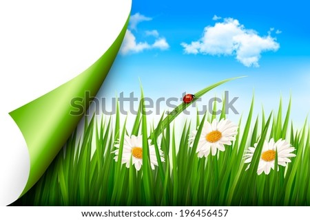 Spring background with flowers, grass and a butterfly. Raster version. - stock photo