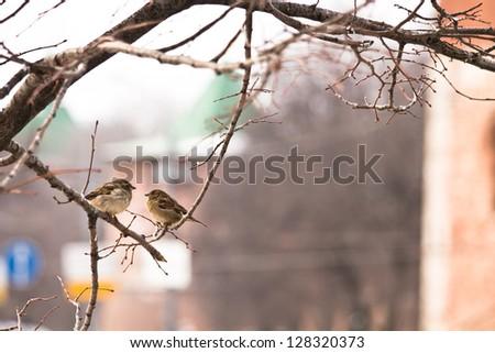 spring bird - stock photo