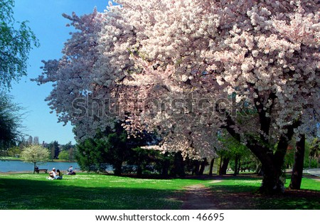 Spring bloom - stock photo