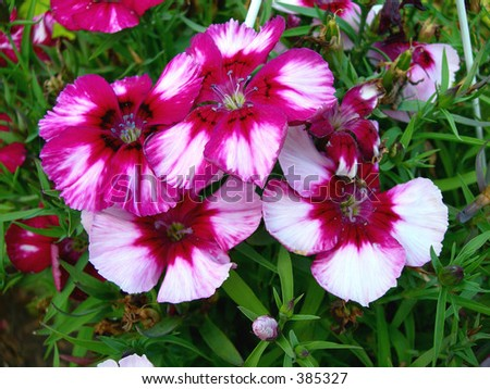 Spring Blooms - stock photo
