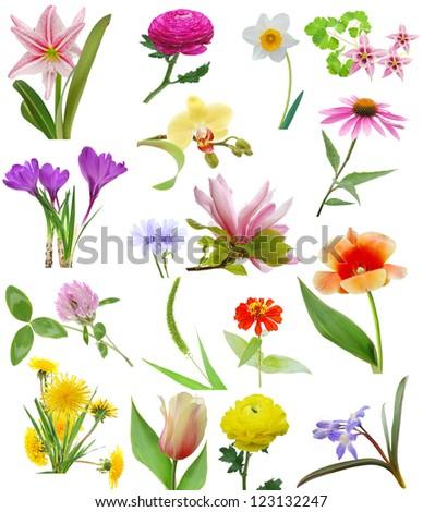 Spring blooms in America - stock photo