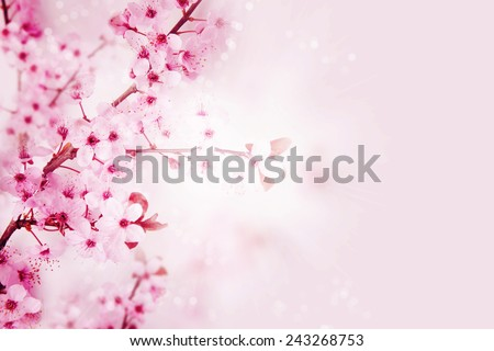 Spring blossom. - stock photo