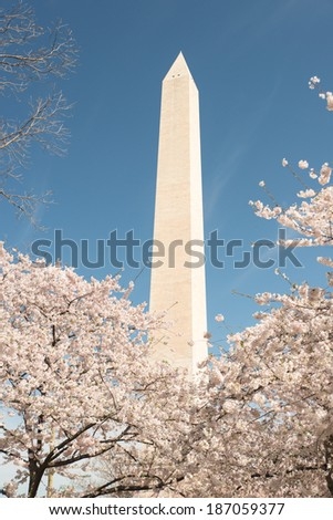 Spring Blossom Festival in Washington DC - stock photo