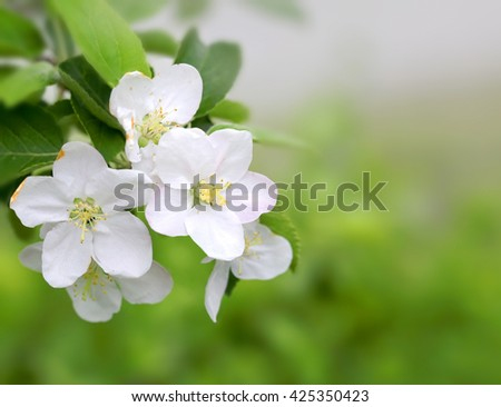 Spring blossom on green blurred background - stock photo