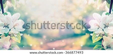 Spring blossom over blurred nature background with sunshine, banner. Retro toned - stock photo