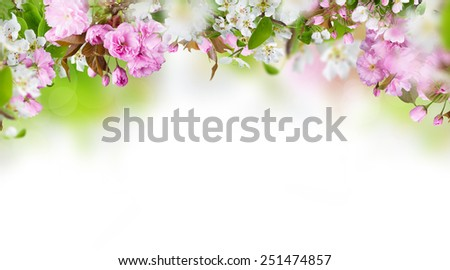 Spring blossom with copy space. - stock photo