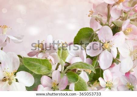 Spring blossoms against soft pink background - stock photo