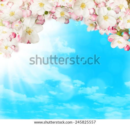 Spring blossoms on blue sky background. Free space for text - stock photo