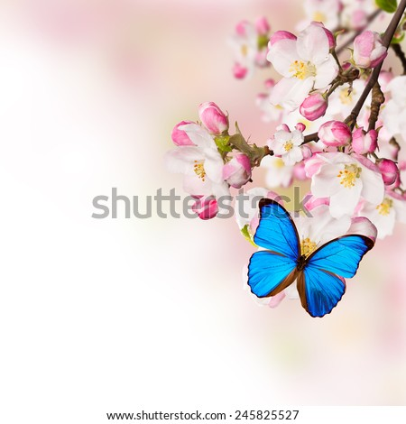 Spring blossoms on white background. Free space for text. - stock photo