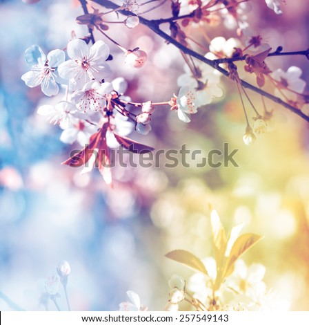 Spring blossoms over blurred nature background/ Spring flowers/Spring Background with bokeh  - stock photo