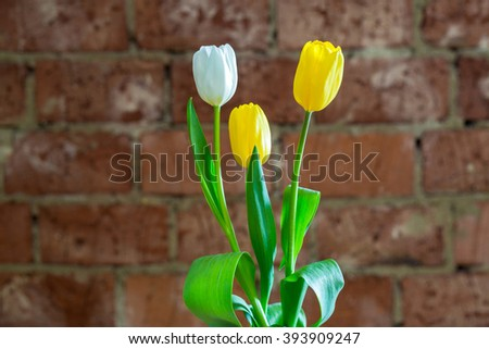 Spring bouquet of tulips on red brick wall background - stock photo