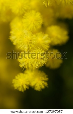 Spring branch and flower - stock photo