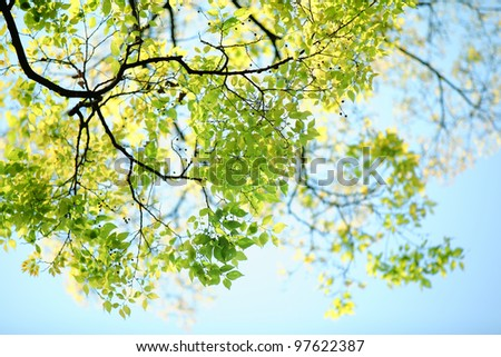 Spring branch with leaves against blue sky - stock photo
