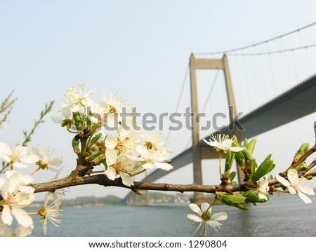 Spring Bridge - stock photo