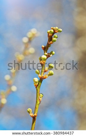 Spring bud. Composition of nature. - stock photo
