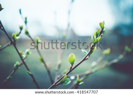 Spring buds on branches, on a dark background. Selective focus. Shallow depth of field. Toned image. - stock photo