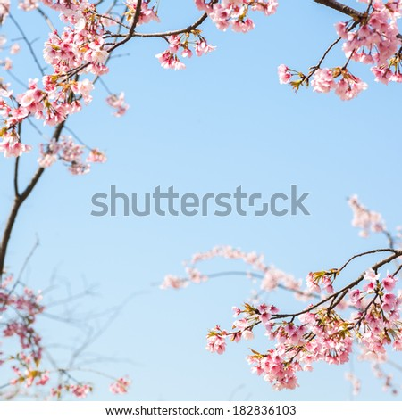 Spring cherry - stock photo