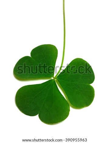Spring clover leaf isolated on white background - stock photo