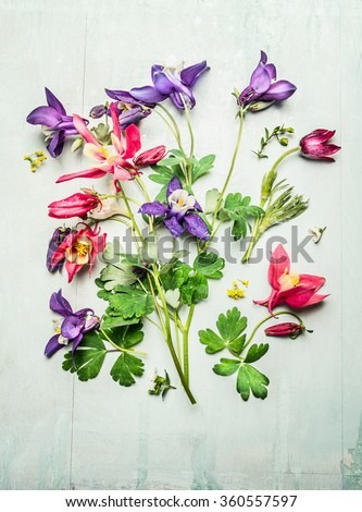 Spring colorful garden flowers, columbines or akelei. Composing on light wooden background, top view. Gardening concept - stock photo