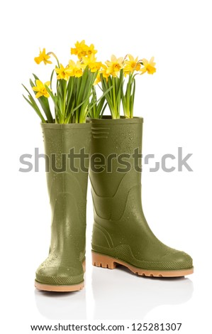 Spring concept with daffodil flowers in wellington boots on white background - stock photo