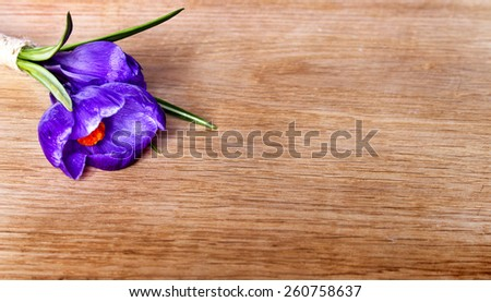 Spring crocus on wooden background - stock photo