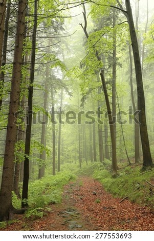 Spring deciduous forest with fog in the distance. - stock photo