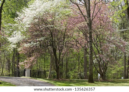 Spring Driveway - stock photo