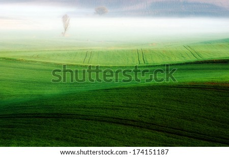 Spring farm. - stock photo