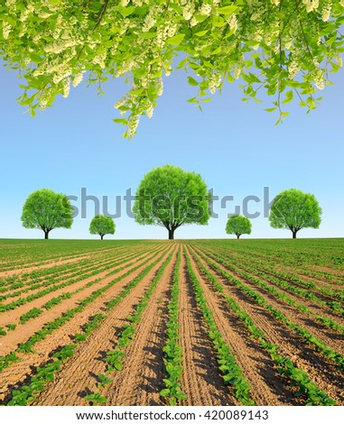 Spring field with trees in sunny day. - stock photo